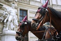 Paarden in Wenen Royalty-vrije Stock Foto's