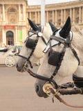Paarden in Wenen Royalty-vrije Stock Fotografie