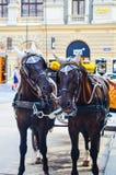 Paarden in Wenen, Oostenrijk Stock Foto's