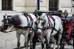 Paarden in Wenen, Oostenrijk Stock Fotografie