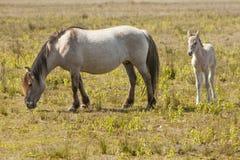 Paarden, wildhorses Stock Afbeelding