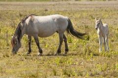 Paarden, wildhorses Royalty-vrije Stock Foto's