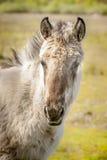 Paarden, wildhorses Royalty-vrije Stock Fotografie