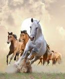 Paarden in zonsondergang stock foto