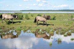 Paardengang langs de vijver in de zomer stock foto's