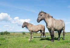 Paardengang op weide in de zomer stock afbeeldingen
