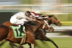 Paardenkoers Stock Afbeelding
