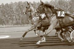 Paardenkoers Royalty-vrije Stock Foto's