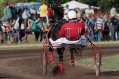 Paardenkoers bij renbaan stock fotografie