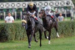 Paardenkoers bij renbaan stock foto's