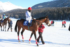 Paardenkoers op Sneeuw stock foto