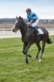 Paardenkoers opleiding De concurrentiesport hippodrome outdoors royalty-vrije stock afbeelding
