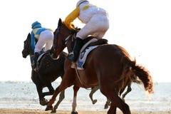 Paardenkoersen in het strand stock afbeelding