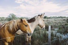 Paardenland Stock Foto's