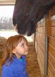 Paardenliefde die vroeg beginnen Stock Foto's