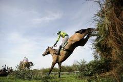 Paardenrennen stock fotografie