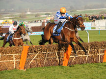 Paardenrennen Royalty-vrije Stock Foto