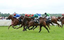 Paardenrennen Stock Foto