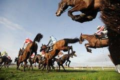 Paardenrennen Royalty-vrije Stock Afbeelding