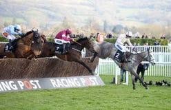 Paardenrennen Royalty-vrije Stock Foto's