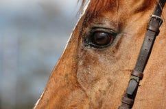 Paardenrennen 4 Stock Afbeelding