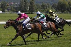 Paardenrennen - de Grand Prix van Juni in Praag Stock Afbeelding