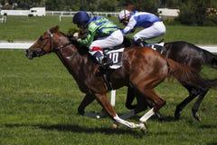 Paardenrennen - de Grand Prix van Juni in Praag Stock Fotografie