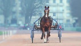 Paardenrennen, Franse Draver die, uitrusting bij renbaan, Caen, Normandië, Frankrijk rennen stock video