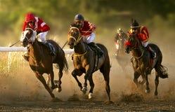 Paardenrennen op de renbaan van Belgrado Royalty-vrije Stock Foto's