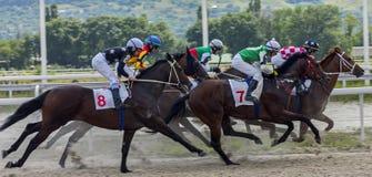 Paardenrennen van de prijs van de Eerste Voorzitter van Tchetcheense Republ royalty-vrije stock foto