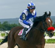 Paardenrennen voor de prijs van Ogranichitelni stock fotografie