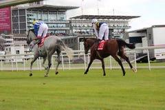 Paardenrennen, Yorkshire, Engeland Stock Afbeelding