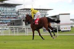 Paardenrennen, Yorkshire, Engeland Royalty-vrije Stock Foto