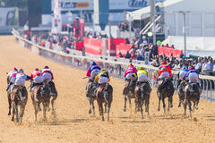 Paardenrennenactie Royalty-vrije Stock Afbeeldingen