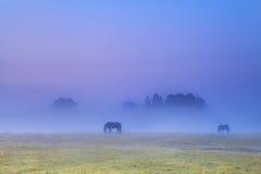 Paardensilhouetten in het dichte mist weiden Stock Afbeeldingen