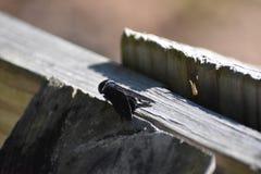 Paardevliegzitting op post stock foto