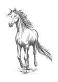 Paardgalop het lopen Het portret van de potloodschets Stock Afbeeldingen
