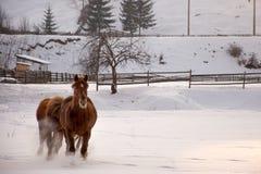 Paardgalop op sneeuw royalty-vrije stock foto's