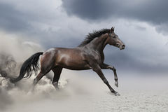Paardgalop in woestijn stock foto
