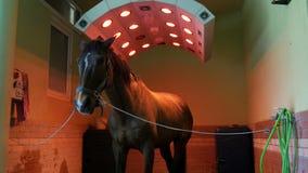 Paardgezondheidszorg in stal, was, het schoonmaken en solarium stock footage