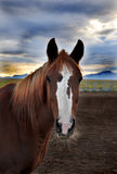 Paardhoofd bij zonsondergang Stock Fotografie