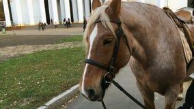 Paardhoofd voor het berijden Het paard verwacht zij die in het park willen berijden stock footage