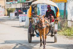 Paardkar in Chitwan, Sauraha, Nepal stock afbeeldingen
