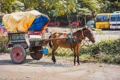 Paardkar in Chitwan, Sauraha, Nepal royalty-vrije stock afbeelding