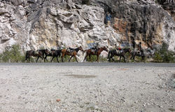 Paardkonvooi stock afbeelding