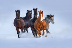 Paardkudde in sneeuw in werking die wordt gesteld die stock afbeeldingen