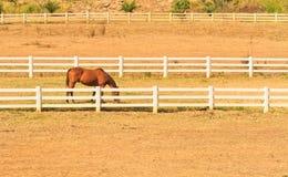 Paardlandbouwbedrijf Stock Foto's