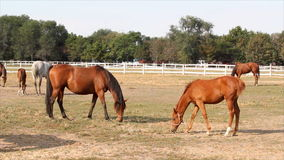 Paardlandbouwbedrijf stock footage
