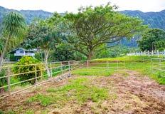 Paardlandbouwbedrijf buiten in Nieuw Zeeland stock foto's