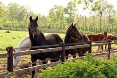 Paardlandbouwbedrijf in het platteland Stock Foto